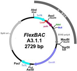 FlexBAC311
