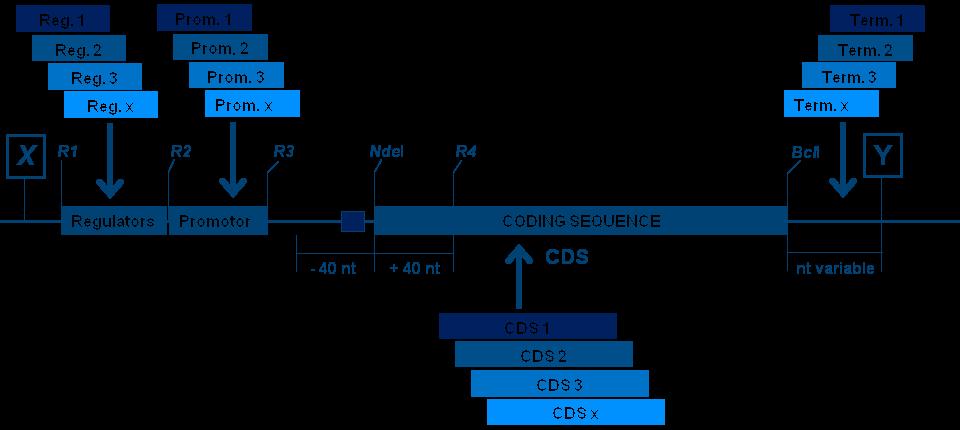 Gene Module Variants