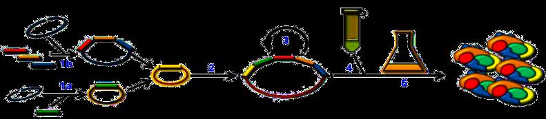 Flow chart of multigeneering