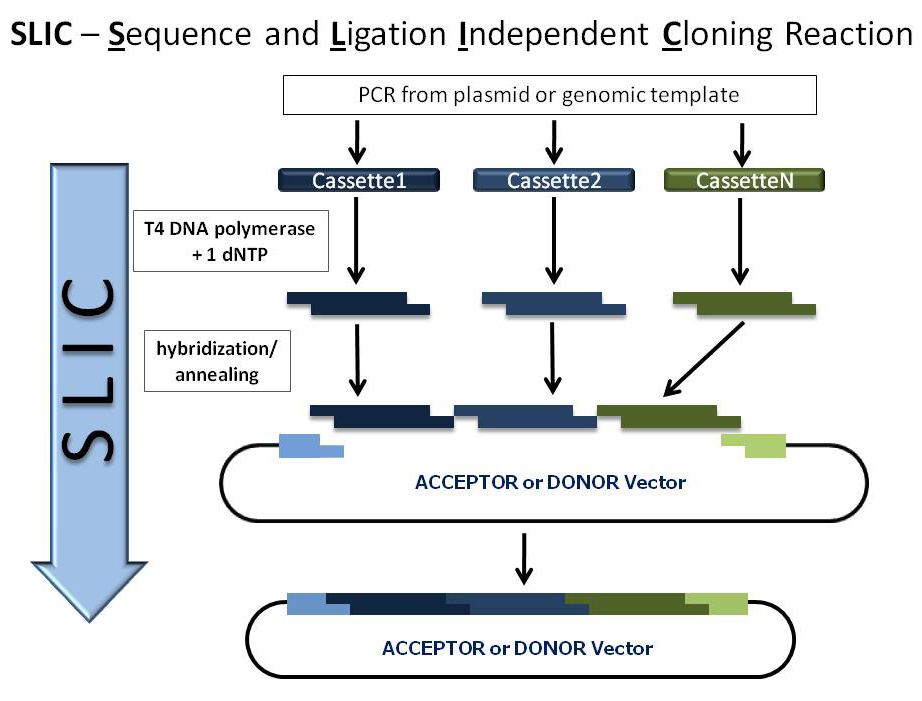 cloning reaction paper Recommended citation burt, robert a, constitutional constraints on the regulation of cloning (2009) faculty scholarship series690 .